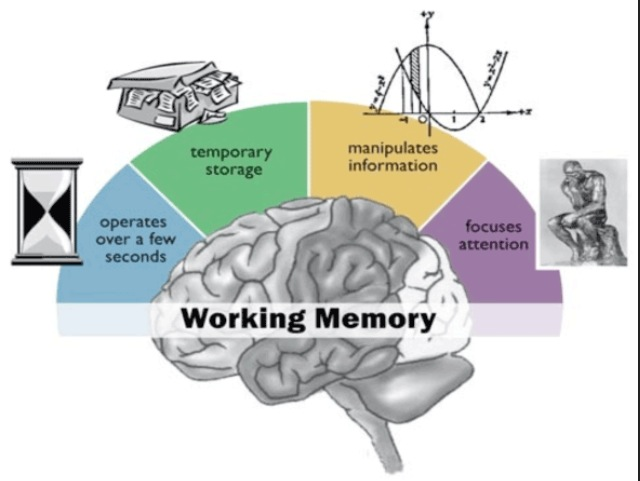 psychology essay working memory model Psychology misleading information  development learning and cognition essay pierce seymour  outline and evaluate the working memory model.